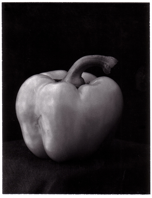Pepper. Chemically shot, developed, printed and retouched (and then scanned) in 2002